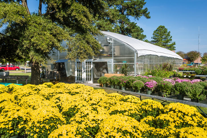 PCC greenhouse with yellow flowers in the foreground.